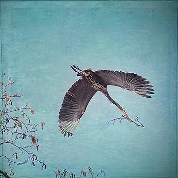 Nesting Heron in Flight by Peggy Collins
