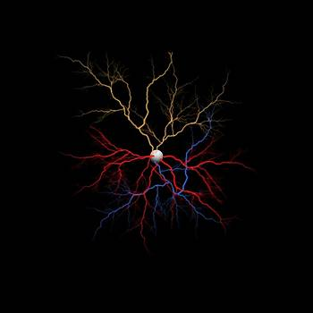 Neuron X1X Example by Betsy Knapp