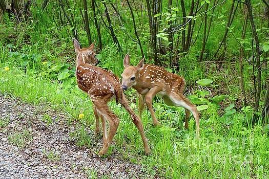 New Babies  by Sandra Updyke