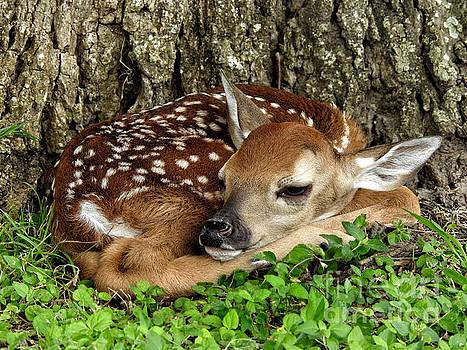 New Born Fawn forest animals by Ella Kaye Dickey