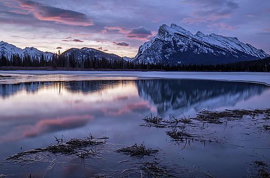 New Dawn by Celine Pollard