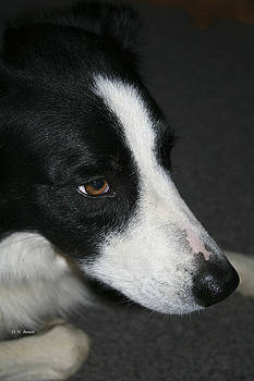 Deborah Benoit - New Dog Friend