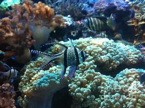 New England Aquarium Colors by Becca J