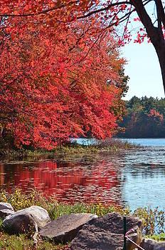 New England Fall by Mandi Howard