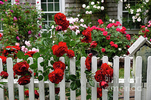 New England Rose Garden by John Greim