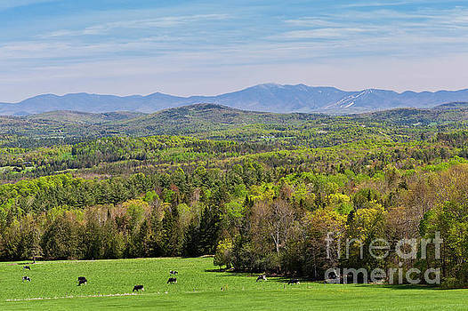 New England Spring View by Alan L Graham
