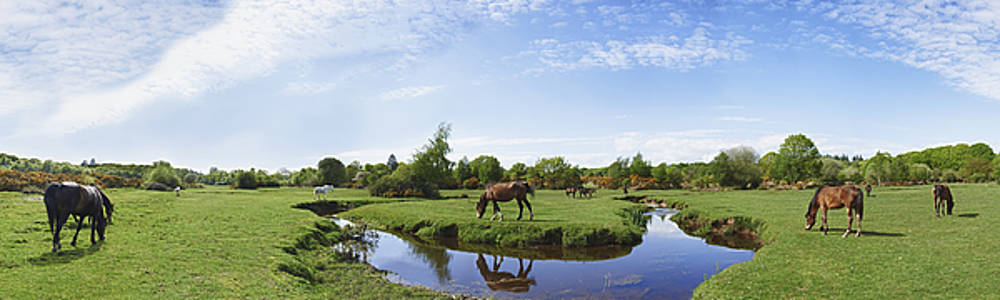 New Forest Horses by Adrian Brockwell