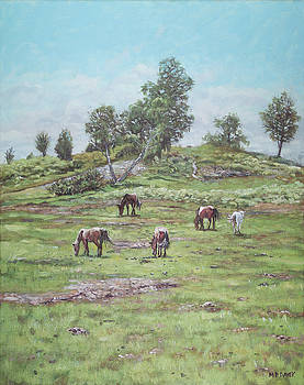 Martin Davey - New Forest Lyndhurst Hampshire