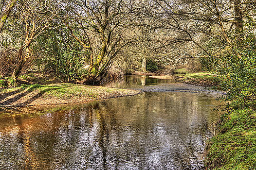 New Forest Waters by Hazy Apple
