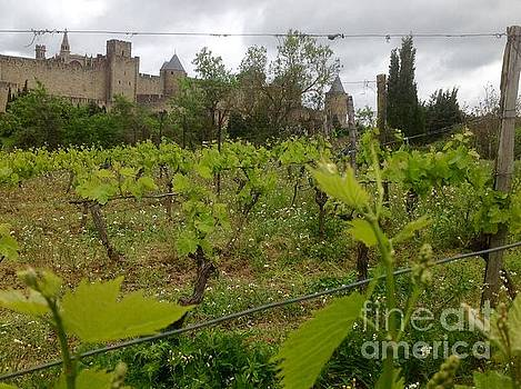 New Grapes..Old City by France Art