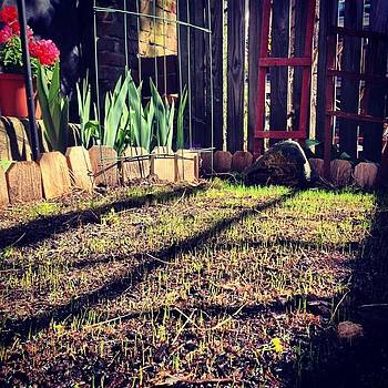 New Grass. #mygarden #provincetown by Ben Berry
