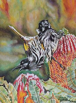 New Holland Honeyeaters by Leonie Bell