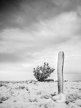 New Mexico Fence Post in Winter  in Black and White by Mary Lee Dereske