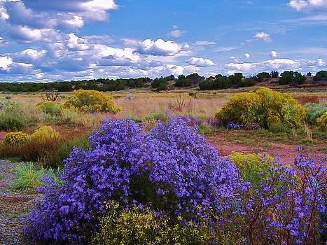 New Mexico Wildflowers by Diana Dearen