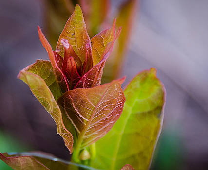 New Spring Leaf by Don L Williams