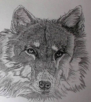 Wolf. by Cynthia Adams