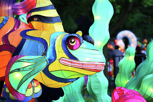 New York State Chinese Lantern Festival 35 by David Stasiak