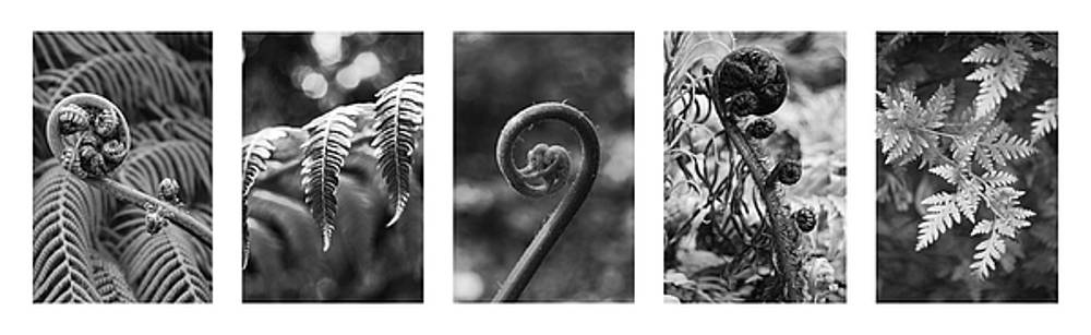 New Zealand Ferns by Jocelyn Friis