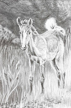 Newborn Foal by Sandy Brooks