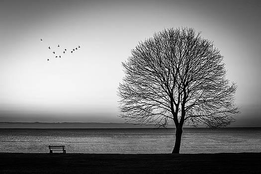 Newcastle Tree by Dana Plourde