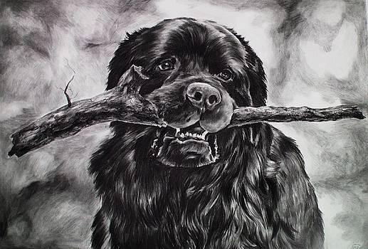Newfoundland Dog by Cassandra Gallant