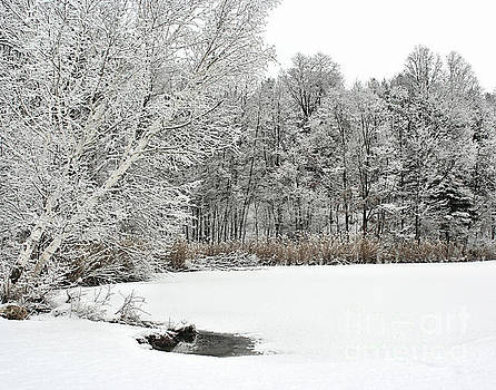 Newly Fallen Snow by Smilin Eyes  Treasures
