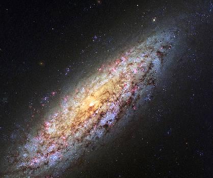 Ricky Barnard - NGC 6503