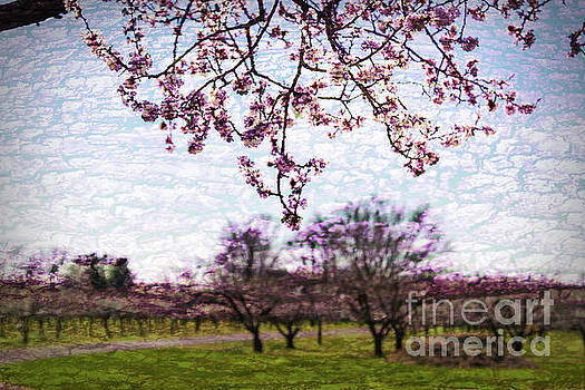 Niagara Blossoms by Marilyn Cornwell