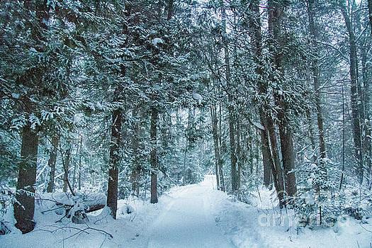 Niagara Escarpment Winter Path by Marilyn Cornwell