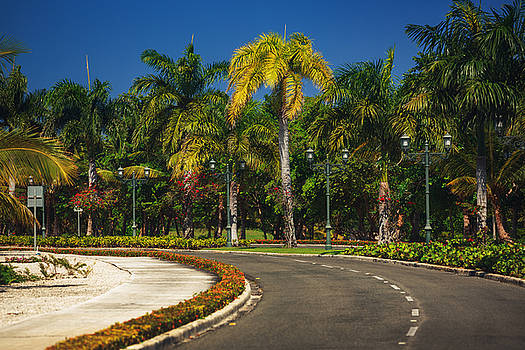 Nice asfalt road with palm trees against the blue sky by Valentin Valkov