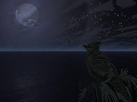 Night bird by Darren Cannell