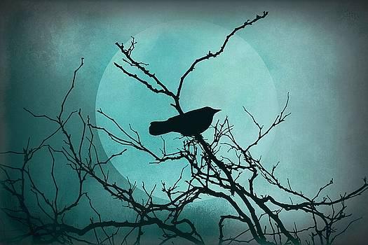 Patricia Strand - Night Bird