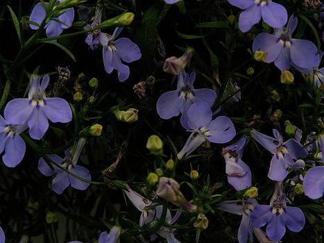 Night Blooms by Susan Tribuzio