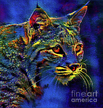 Night Cat by Kathy Kelly