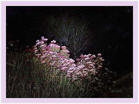 Night Flowers by YoMamaBird Rhonda
