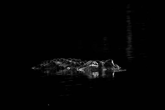 Night Hunter 2 by Mark Andrew Thomas