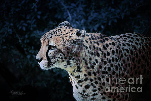 Night Hunting by Inspirational Photo Creations Audrey Woods