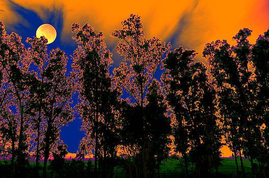 Bliss Of Art - Night kindle