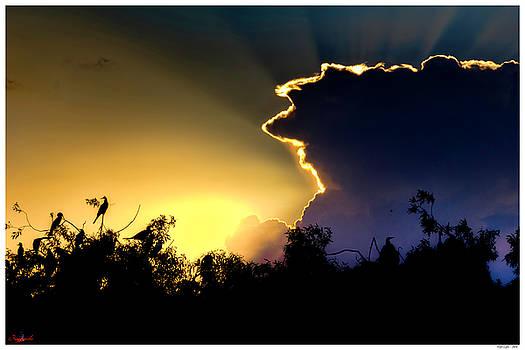 Night Light by Rogermike Wilson