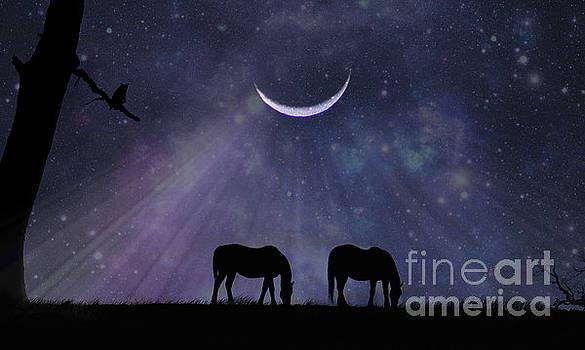 Night Magic by Stephanie Laird