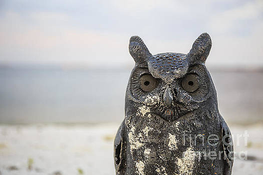 Edward Fielding - Night Owl