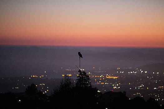 Night Owl over San Francisco by Digiblocks Photography