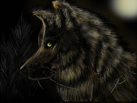 Night silent wolf by Darren Cannell