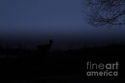 Night time buck by Lori Tordsen
