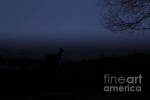 Night time buck by Lori Tordsen