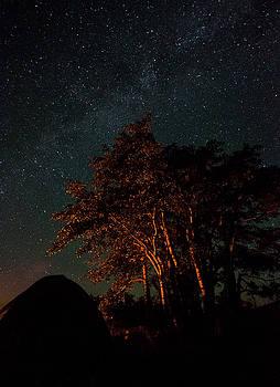 Jedediah Hohf - Night Tree