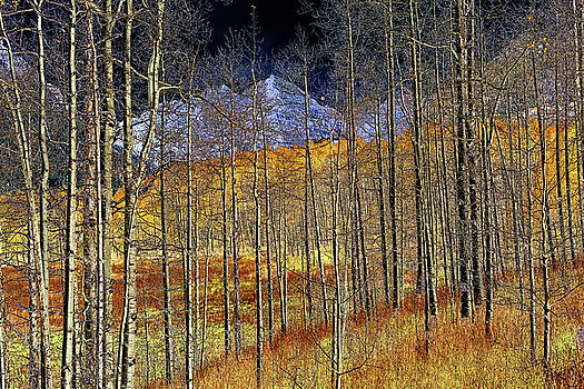 Night Trees #2 by Eric Glaser