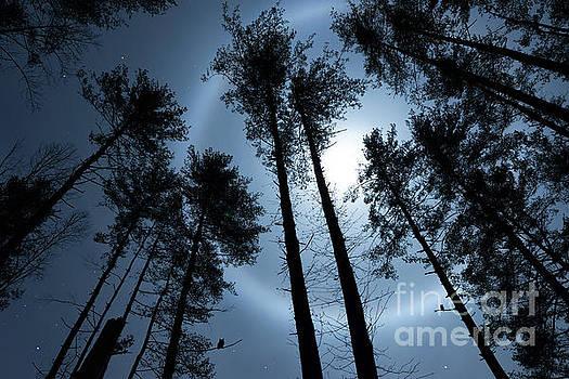 Night Watch by Anthony Heflin