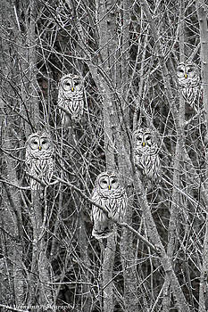 Night Watchers by Lee Yeomans