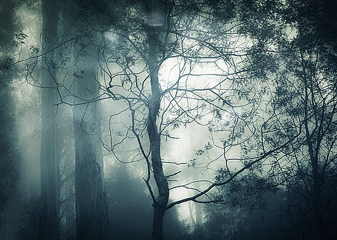 Nightfall by Amy Weiss